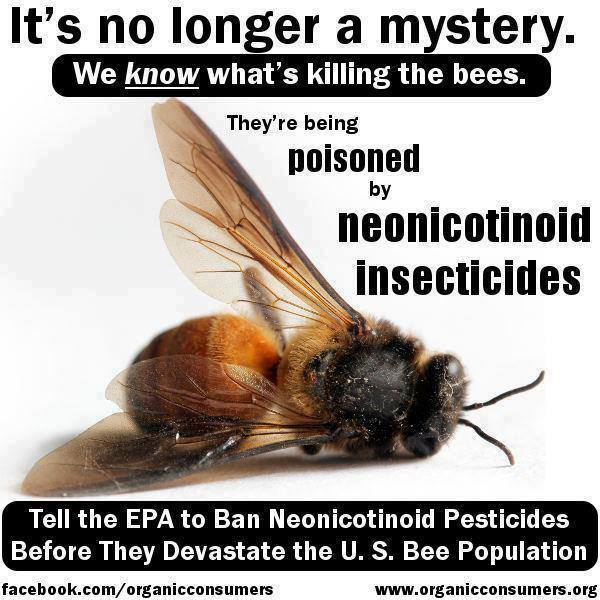 beespoisonedbyinsecticides