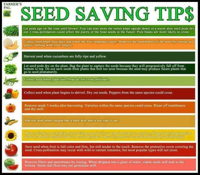 seedsavingtip