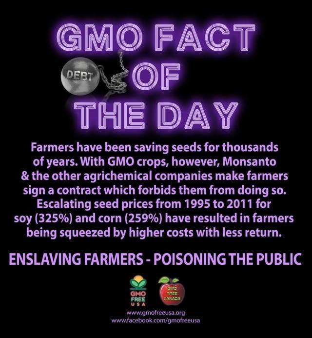 GMO fact