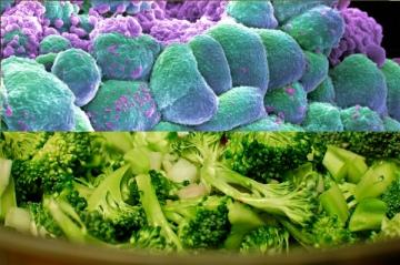 broccoli.cancer