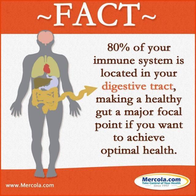 digestive system immune