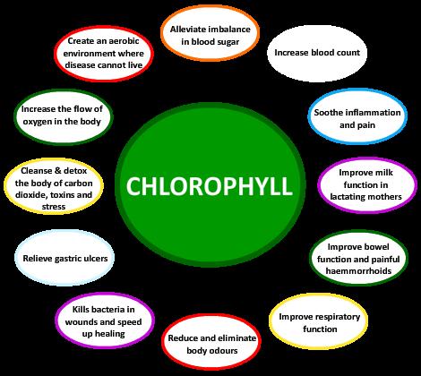 chlorophyll (1)