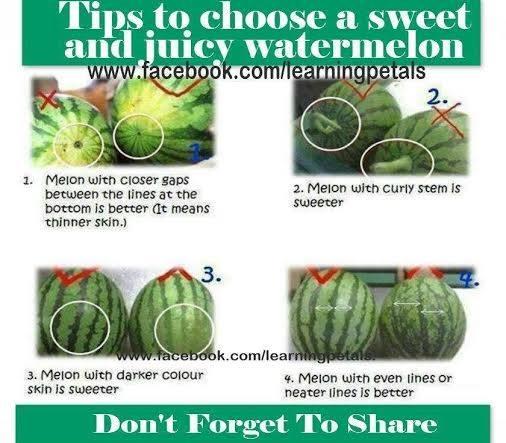 choosing melons